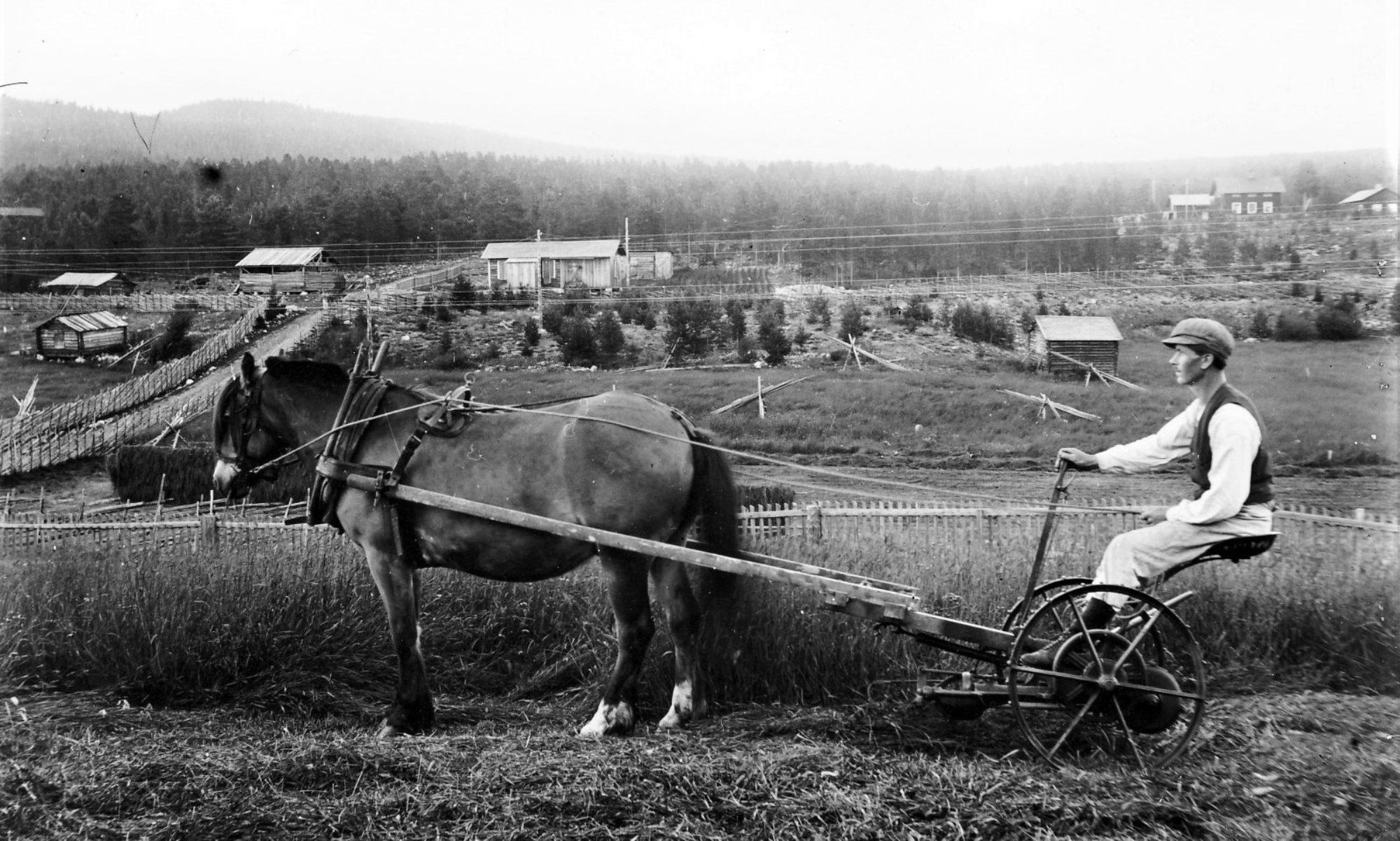 Hedeviken och Sörviken, en dokumentation